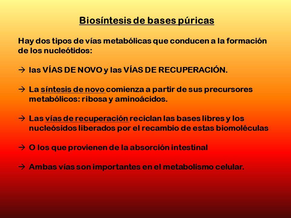 Biosíntesis de bases púricas Hay dos tipos de vías metabólicas que conducen a la formación de los nucleótidos: las VÍAS DE NOVO y las VÍAS DE RECUPERA