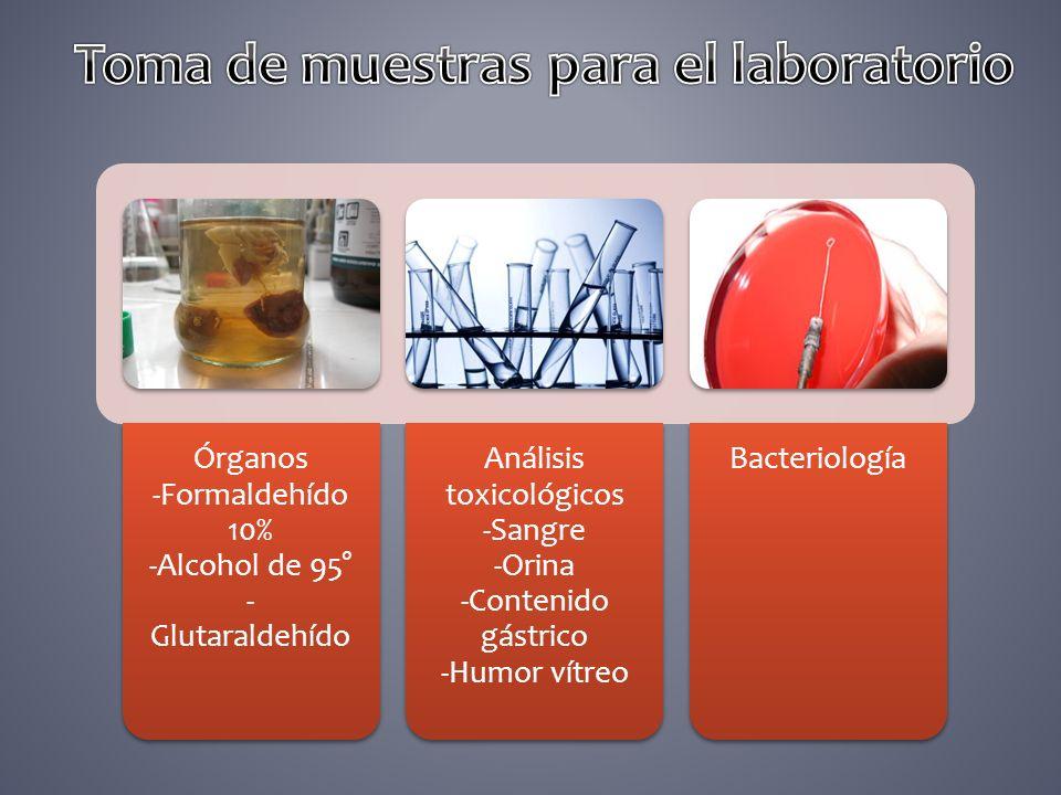 Órganos -Formaldehído 10% -Alcohol de 95° - Glutaraldehído Análisis toxicológicos -Sangre -Orina -Contenido gástrico -Humor vítreo Bacteriología