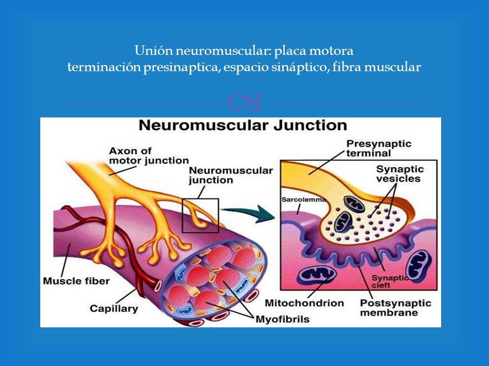 Receptor Nicotínico