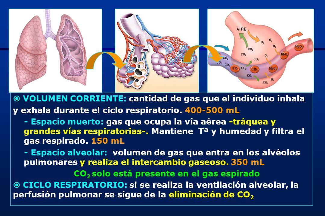 2 VOLUMEN CORRIENTE: cantidad de gas que el individuo inhala y exhala durante el ciclo respiratorio. 400-500 mL - Espacio muerto: gas que ocupa la vía