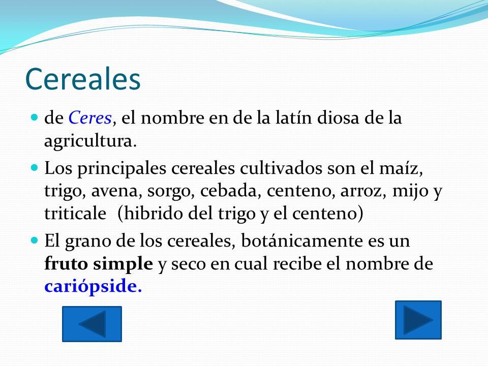 Cereales de Ceres, el nombre en de la latín diosa de la agricultura. Los principales cereales cultivados son el maíz, trigo, avena, sorgo, cebada, cen