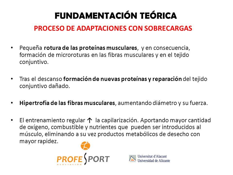FUNDAMENTACIÓN TEÓRICA LEYES BÁSICAS (BOMPA, 2002) 1.- DESARROLLO DE LA FLEXIBILIDAD ARTICULAR Prevención de lesiones a consecuencia de fatiga. Eficac