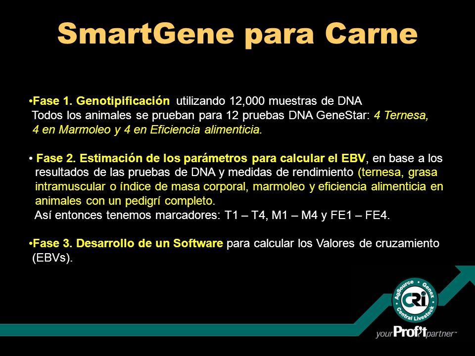 SmartGene para Carne Fase 1. Genotipificación utilizando 12,000 muestras de DNA Todos los animales se prueban para 12 pruebas DNA GeneStar: 4 Ternesa,