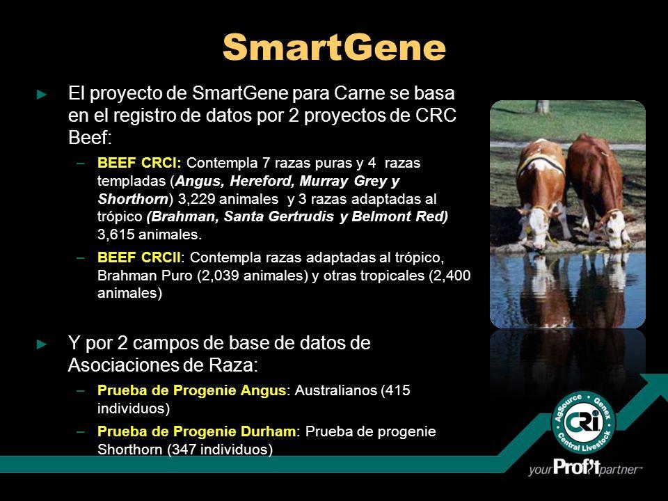 SmartGene El proyecto de SmartGene para Carne se basa en el registro de datos por 2 proyectos de CRC Beef: –BEEF CRCI: Contempla 7 razas puras y 4 raz