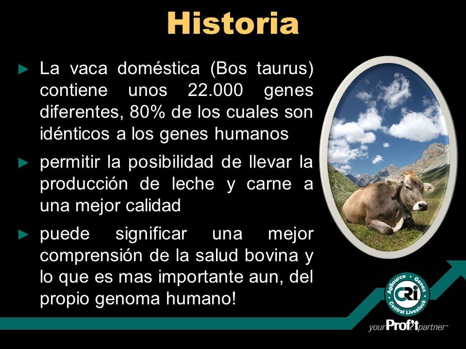 Historia La vaca doméstica (Bos taurus) contiene unos 22.000 genes diferentes, 80% de los cuales son idénticos a los genes humanos permitir la posibil