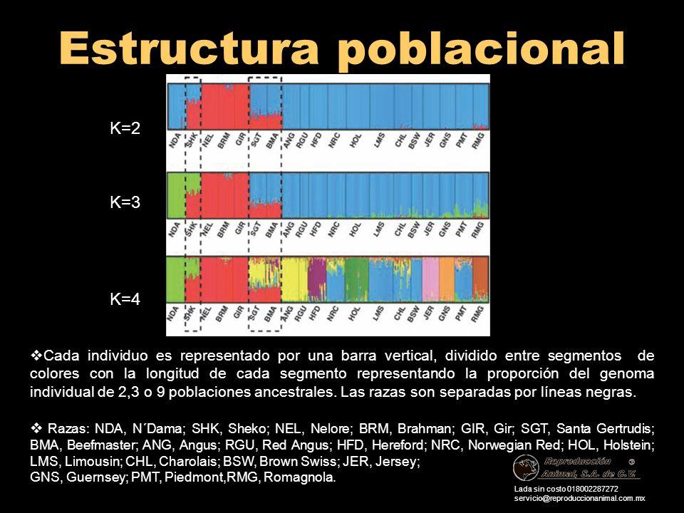 Estructura poblacional Lada sin costo 018002287272 servicio@reproduccionanimal.com.mx Cada individuo es representado por una barra vertical, dividido