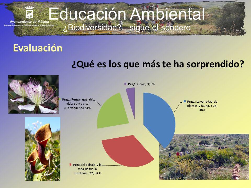 Educación Ambiental Evaluación ¿Qué es los que más te ha sorprendido? ¿Biodiversidad?.. sigue el sendero