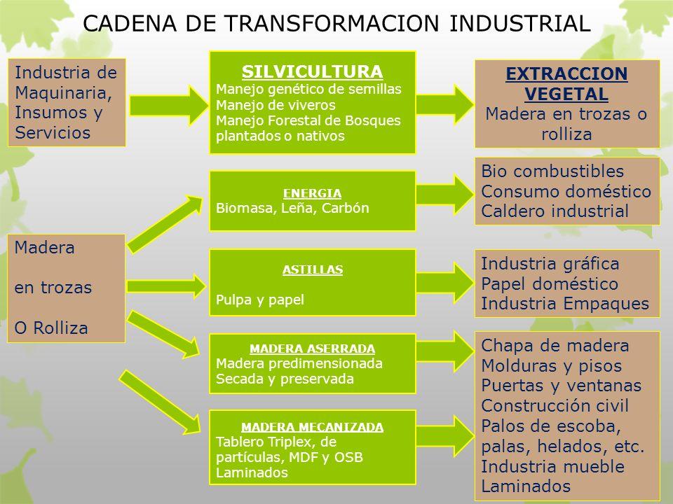 CADENA DE TRANSFORMACION INDUSTRIAL Industria de Maquinaria, Insumos y Servicios SILVICULTURA Manejo genético de semillas Manejo de viveros Manejo For