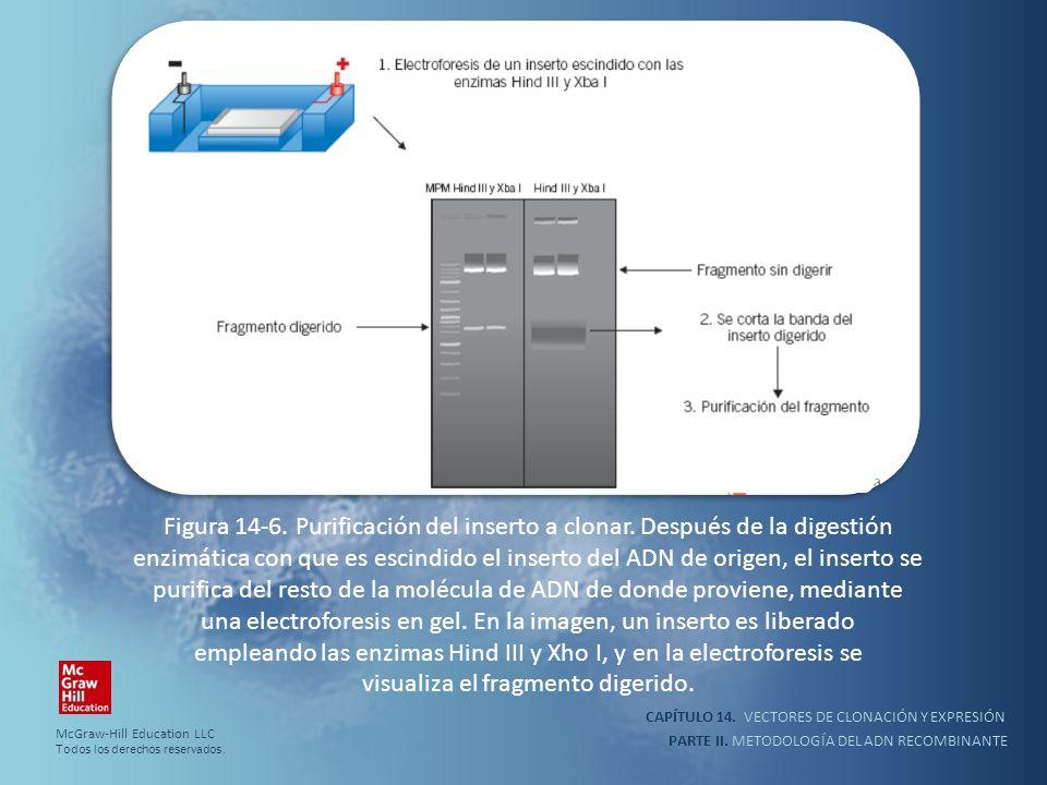 CAPÍTULO 14. VECTORES DE CLONACIÓN Y EXPRESIÓN PARTE II. METODOLOGÍA DEL ADN RECOMBINANTE Figura 14-6. Purificación del inserto a clonar. Después de l