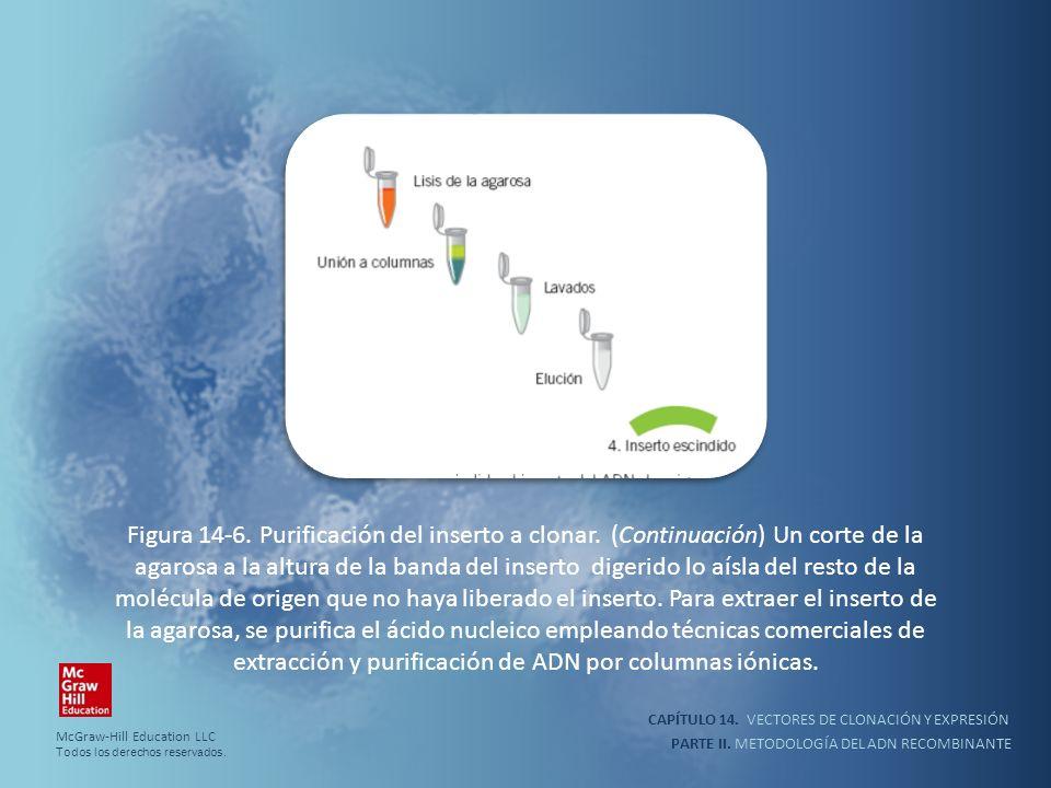 CAPÍTULO 14. VECTORES DE CLONACIÓN Y EXPRESIÓN PARTE II. METODOLOGÍA DEL ADN RECOMBINANTE Figura 14-6. Purificación del inserto a clonar. (Continuació
