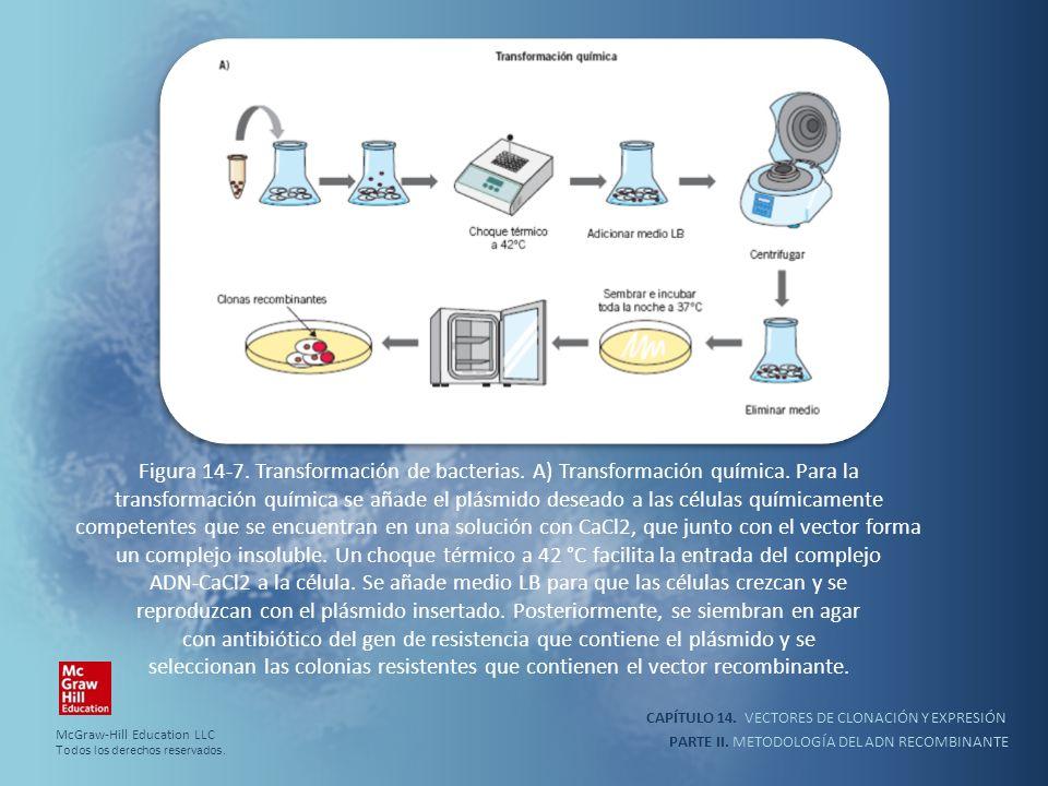 CAPÍTULO 14. VECTORES DE CLONACIÓN Y EXPRESIÓN PARTE II. METODOLOGÍA DEL ADN RECOMBINANTE Figura 14-7. Transformación de bacterias. A) Transformación