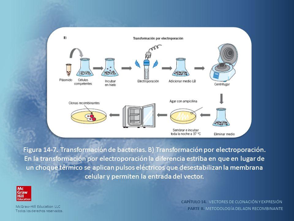 CAPÍTULO 14. VECTORES DE CLONACIÓN Y EXPRESIÓN PARTE II. METODOLOGÍA DEL ADN RECOMBINANTE Figura 14-7. Transformación de bacterias. B) Transformación
