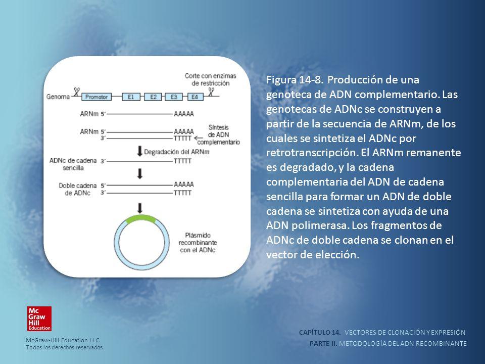 CAPÍTULO 14. VECTORES DE CLONACIÓN Y EXPRESIÓN PARTE II. METODOLOGÍA DEL ADN RECOMBINANTE Figura 14-8. Producción de una genoteca de ADN complementari