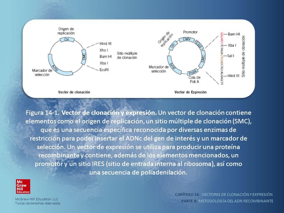 CAPÍTULO 14. VECTORES DE CLONACIÓN Y EXPRESIÓN PARTE II. METODOLOGÍA DEL ADN RECOMBINANTE Figura 14-1. Vector de clonación y expresión. Un vector de c