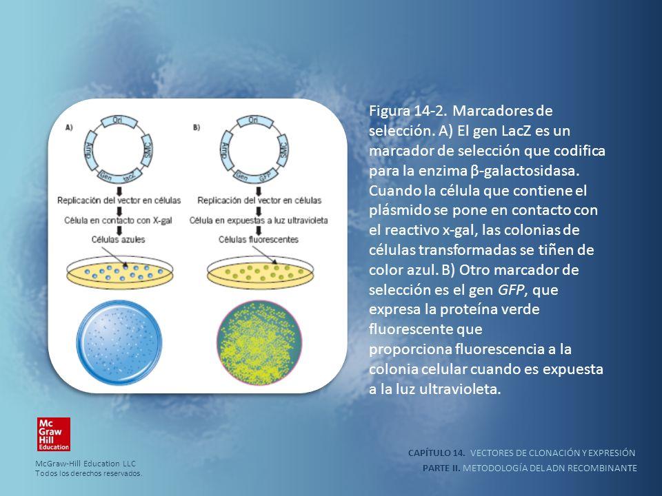 CAPÍTULO 14. VECTORES DE CLONACIÓN Y EXPRESIÓN PARTE II. METODOLOGÍA DEL ADN RECOMBINANTE Figura 14-2. Marcadores de selección. A) El gen LacZ es un m