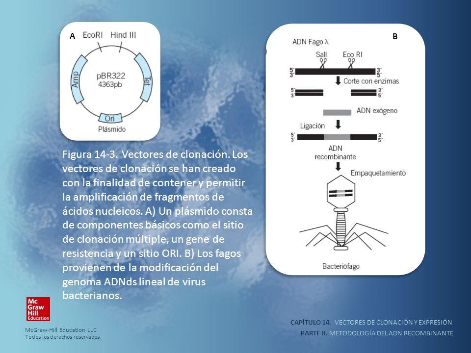 CAPÍTULO 14. VECTORES DE CLONACIÓN Y EXPRESIÓN PARTE II. METODOLOGÍA DEL ADN RECOMBINANTE Figura 14-3. Vectores de clonación. Los vectores de clonació