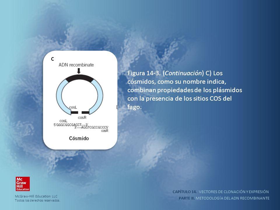 CAPÍTULO 14. VECTORES DE CLONACIÓN Y EXPRESIÓN PARTE II. METODOLOGÍA DEL ADN RECOMBINANTE Figura 14-3. (Continuación) C) Los cósmidos, como su nombre