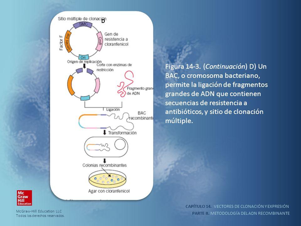 CAPÍTULO 14. VECTORES DE CLONACIÓN Y EXPRESIÓN PARTE II. METODOLOGÍA DEL ADN RECOMBINANTE Figura 14-3. (Continuación) D) Un BAC, o cromosoma bacterian