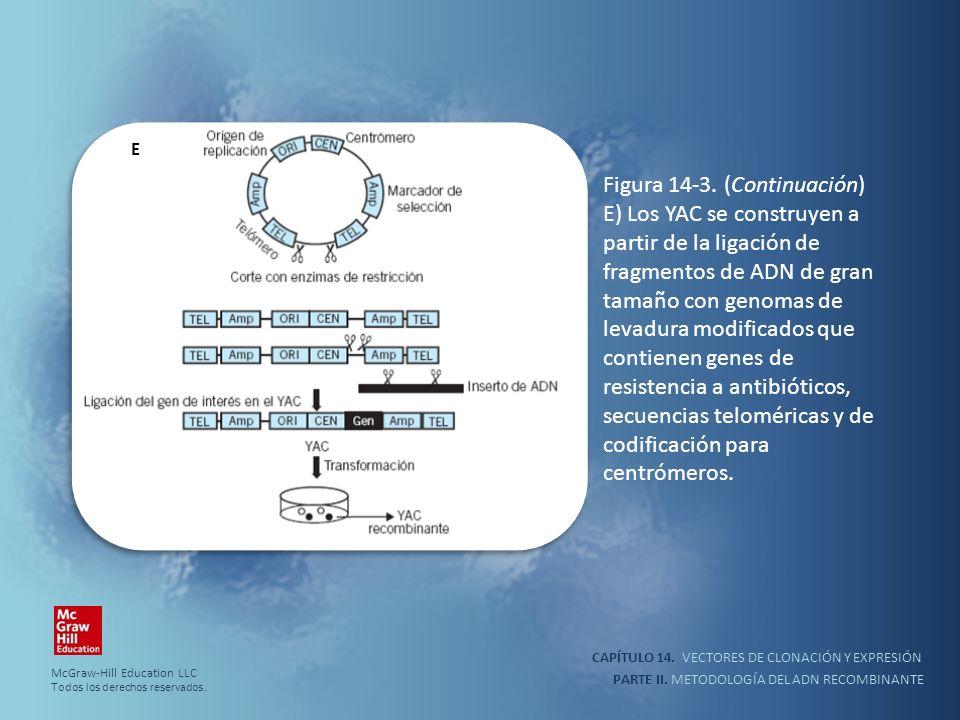 CAPÍTULO 14. VECTORES DE CLONACIÓN Y EXPRESIÓN PARTE II. METODOLOGÍA DEL ADN RECOMBINANTE Figura 14-3. (Continuación) E) Los YAC se construyen a parti
