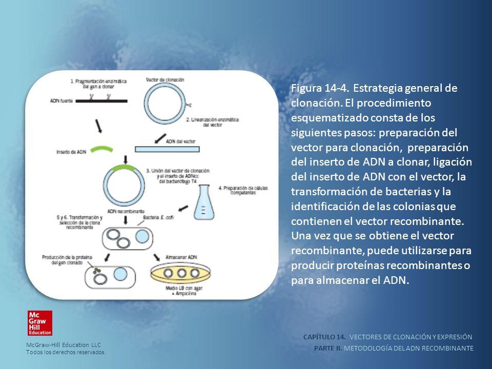 CAPÍTULO 14. VECTORES DE CLONACIÓN Y EXPRESIÓN PARTE II. METODOLOGÍA DEL ADN RECOMBINANTE Figura 14-4. Estrategia general de clonación. El procedimien