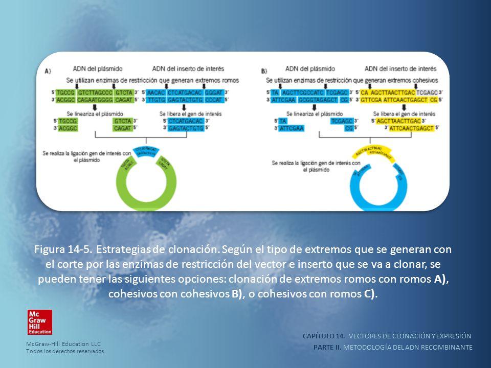 CAPÍTULO 14. VECTORES DE CLONACIÓN Y EXPRESIÓN PARTE II. METODOLOGÍA DEL ADN RECOMBINANTE Figura 14-5. Estrategias de clonación. Según el tipo de extr