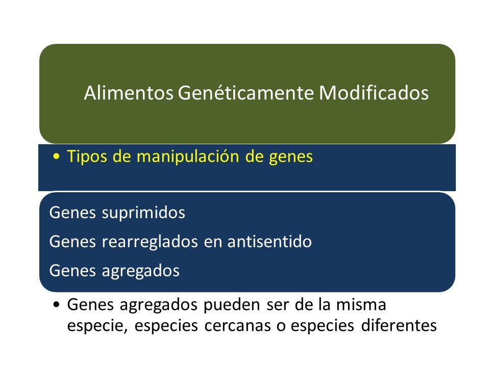 Alimentos Genéticamente Modificados Tipos de manipulación de genes Genes suprimidos Genes rearreglados en antisentido Genes agregados Genes agregados