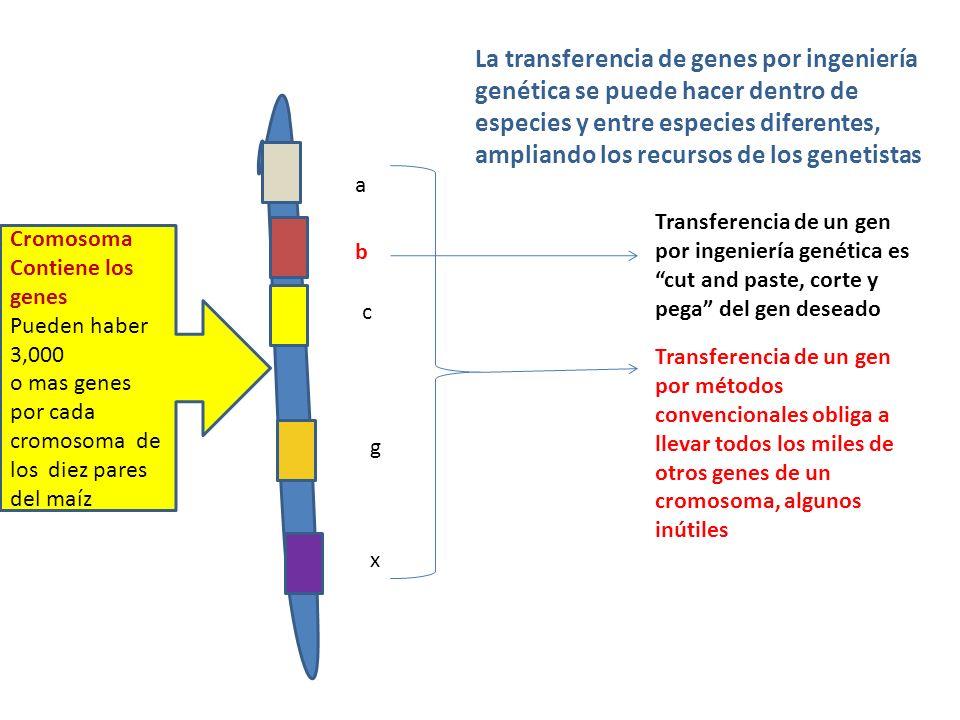 a b c g x Transferencia de un gen por métodos convencionales obliga a llevar todos los miles de otros genes de un cromosoma, algunos inútiles Transfer