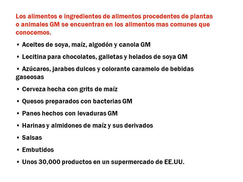 Los alimentos e ingredientes de alimentos procedentes de plantas o animales GM se encuentran en los alimentos mas comunes que conocemos. Aceites de so