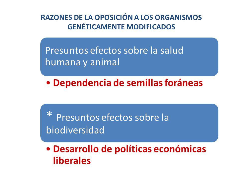 Presuntos efectos sobre la salud humana y animal Dependencia de semillas foráneas * Presuntos efectos sobre la biodiversidad Desarrollo de políticas e