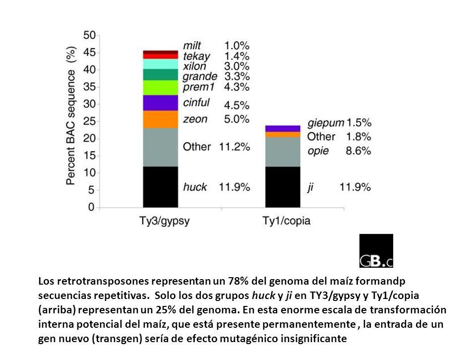 Los retrotransposones representan un 78% del genoma del maíz formandp secuencias repetitivas. Solo los dos grupos huck y ji en TY3/gypsy y Ty1/copia (