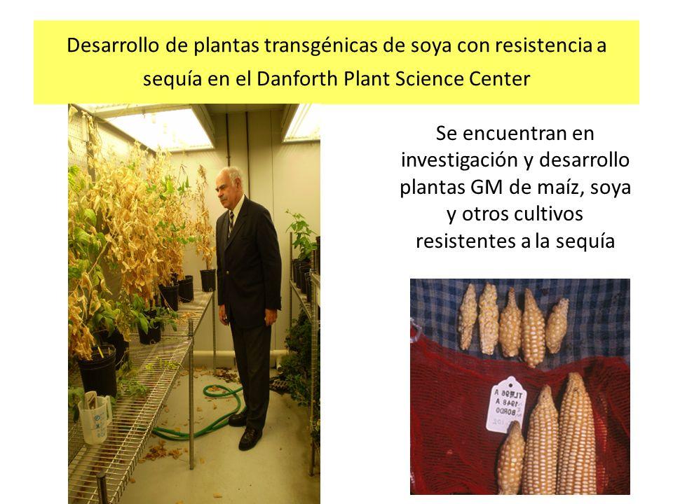 Desarrollo de plantas transgénicas de soya con resistencia a sequía en el Danforth Plant Science Center Se encuentran en investigación y desarrollo pl