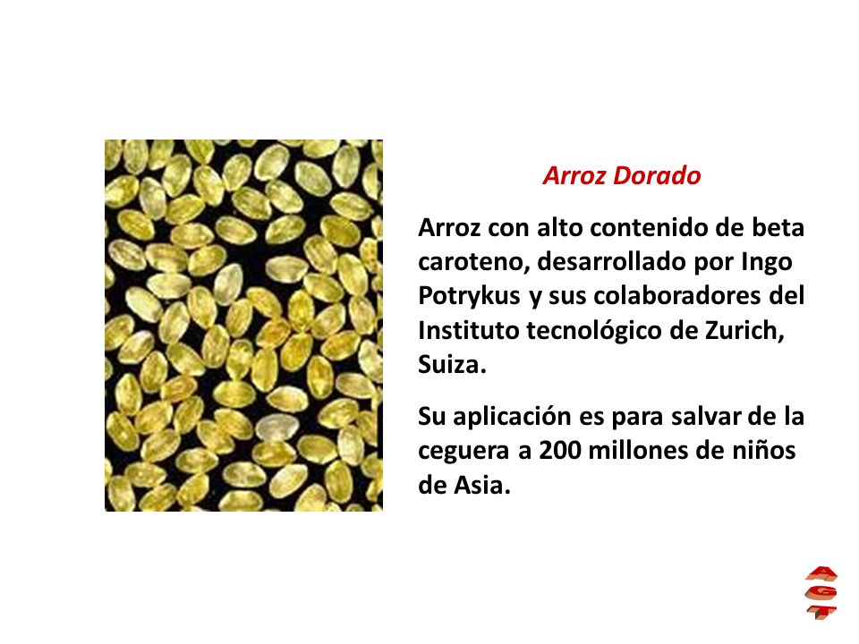 Arroz Dorado Arroz con alto contenido de beta caroteno, desarrollado por Ingo Potrykus y sus colaboradores del Instituto tecnológico de Zurich, Suiza.