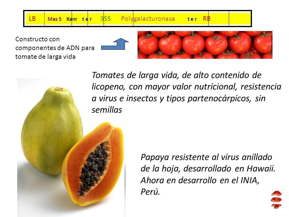 Tomates de larga vida, de alto contenido de licopeno, con mayor valor nutricional, resistencia a virus e insectos y tipos partenocárpicos, sin semilla