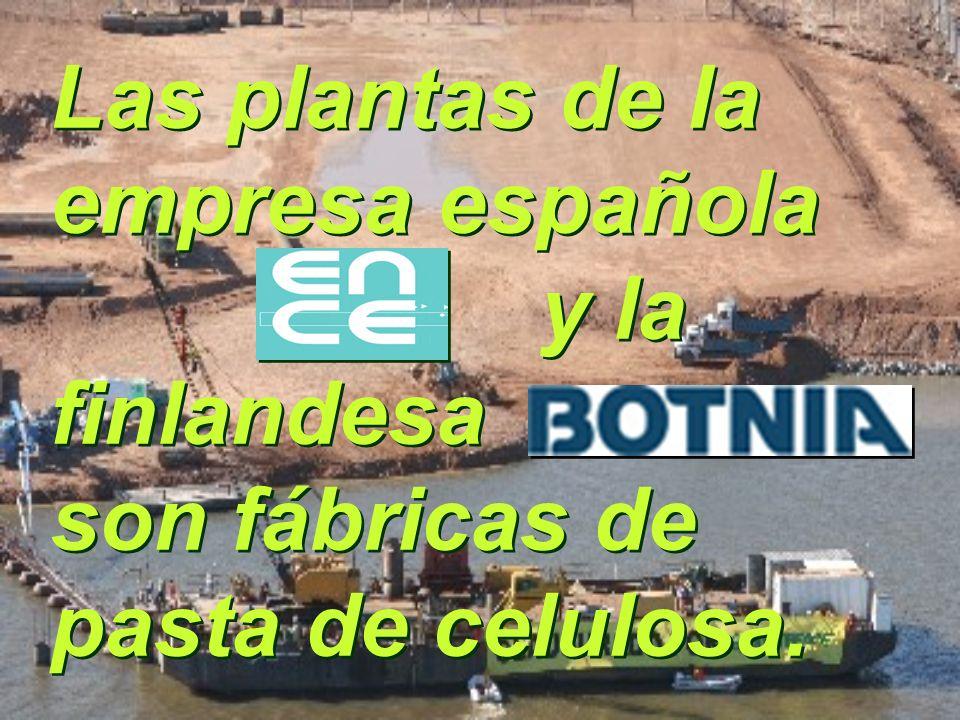 Las plantas de la empresa española y la finlandesa son fábricas de pasta de celulosa.