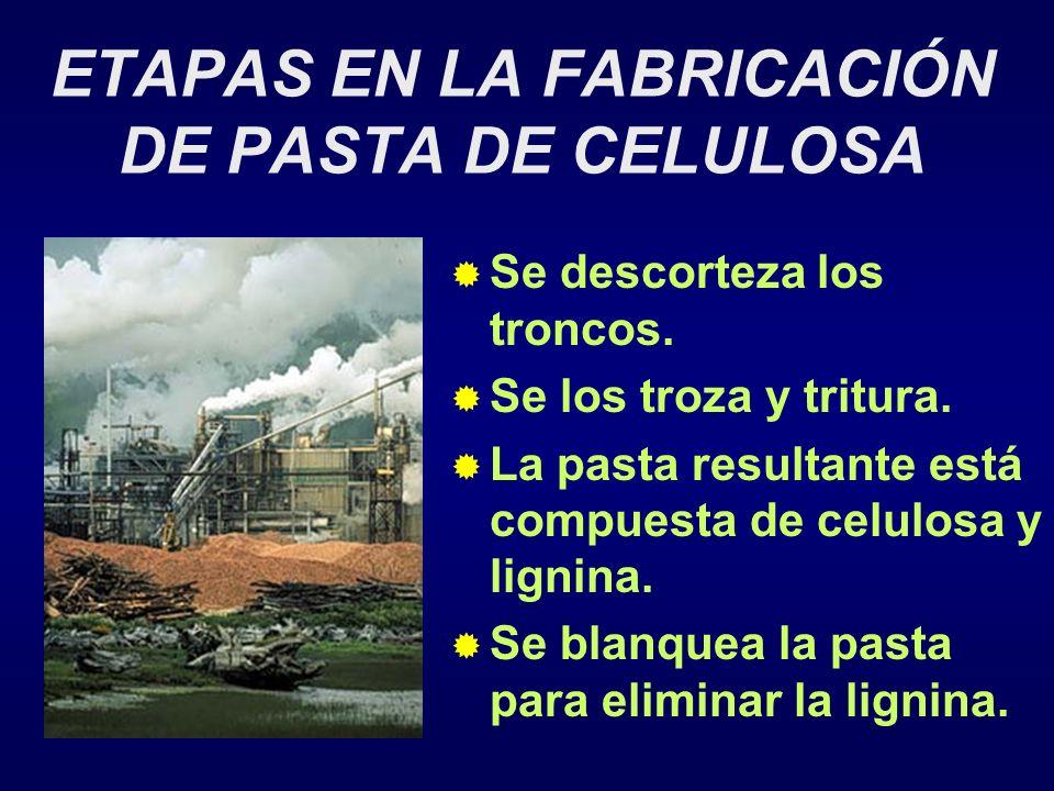 ETAPAS EN LA FABRICACIÓN DE PASTA DE CELULOSA Se descorteza los troncos.