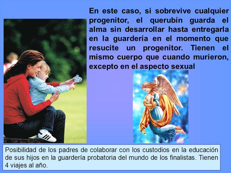 En este caso, si sobrevive cualquier progenitor, el querubín guarda el alma sin desarrollar hasta entregarla en la guardería en el momento que resucite un progenitor.