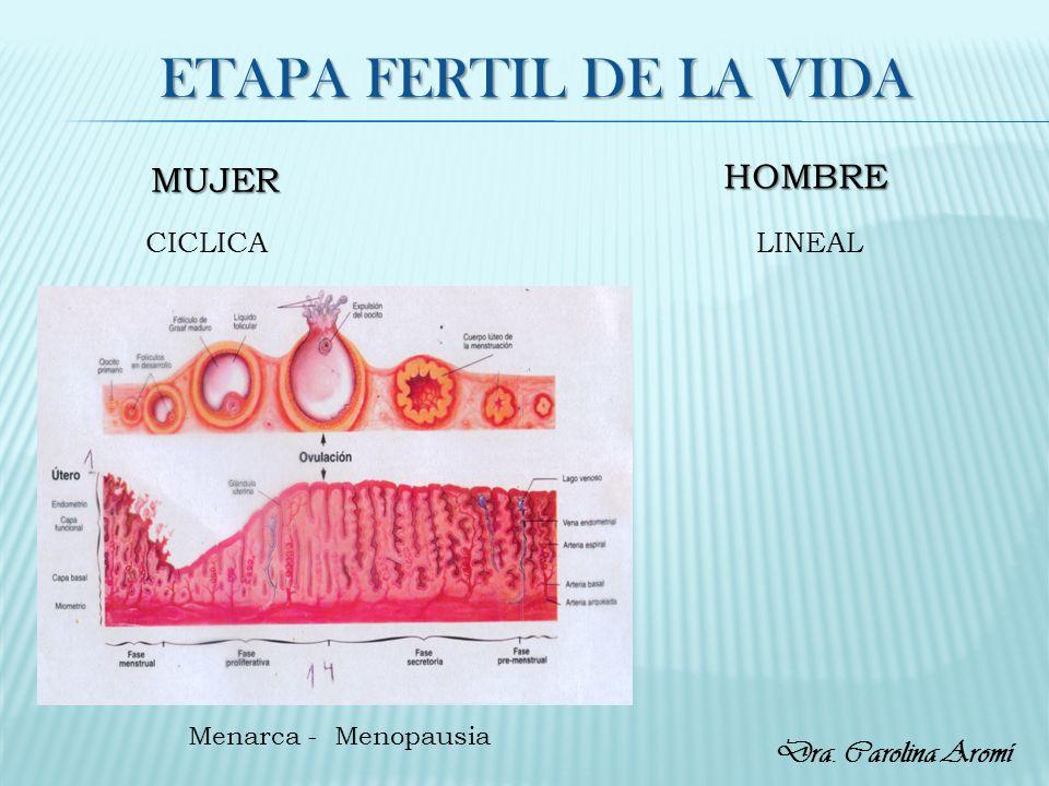ETAPA FERTIL DE LA VIDA MUJER HOMBRE CICLICALINEAL Menarca - Menopausia Dra. Carolina Aromí
