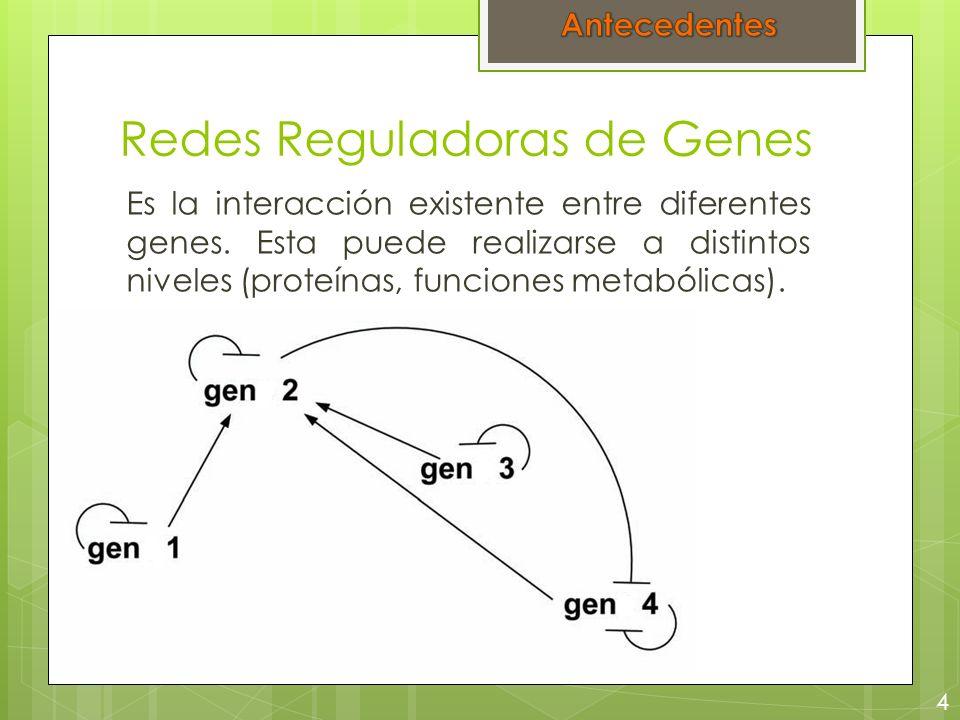 Redes Reguladoras de Genes Es la interacción existente entre diferentes genes. Esta puede realizarse a distintos niveles (proteínas, funciones metaból