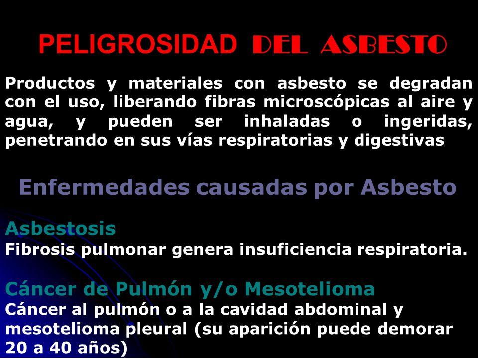 PELIGROSIDAD DEL ASBESTO Enfermedades causadas por Asbesto Asbestosis Fibrosis pulmonar genera insuficiencia respiratoria. Cáncer de Pulmón y/o Mesote