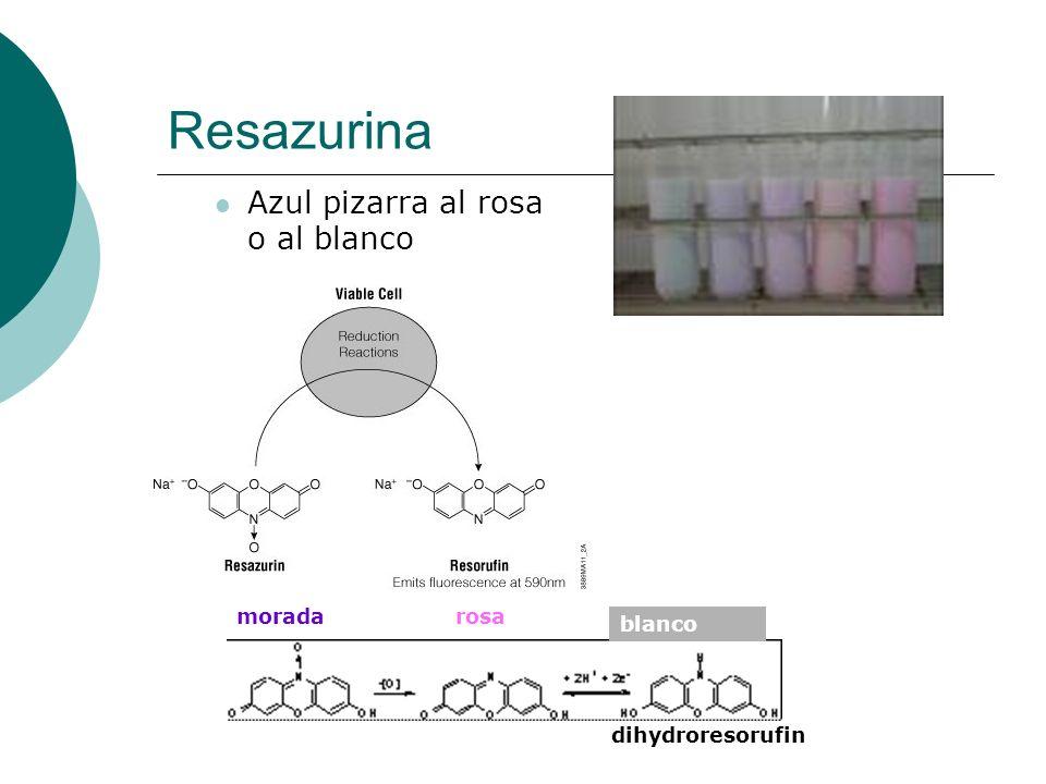 Resazurina Azul pizarra al rosa o al blanco moradarosa dihydroresorufin blanco
