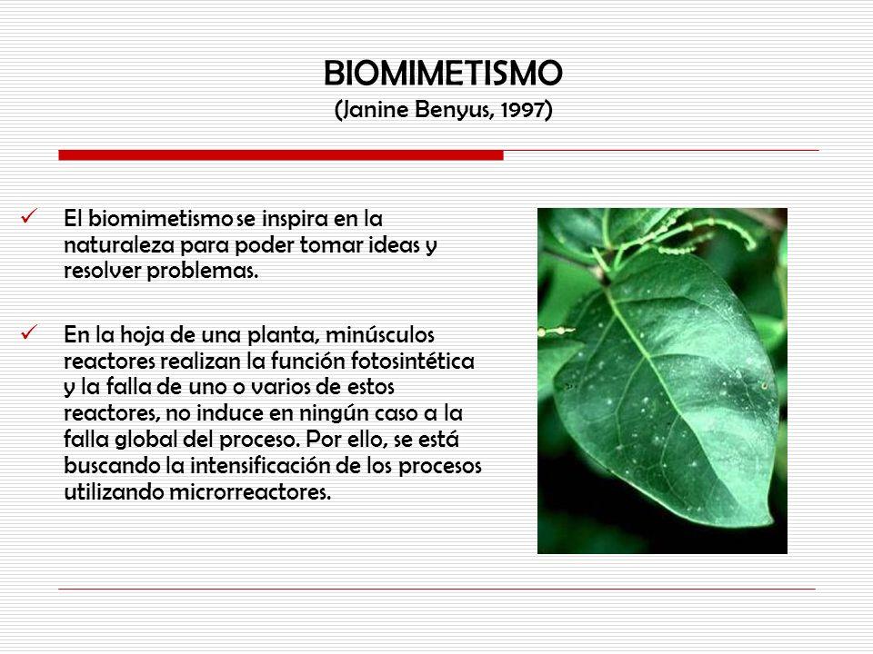 BIOMIMETISMO (Janine Benyus, 1997) El biomimetismo se inspira en la naturaleza para poder tomar ideas y resolver problemas. En la hoja de una planta,