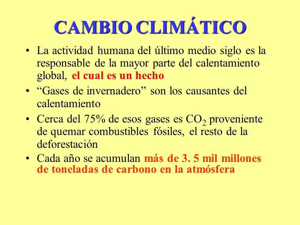 CAMBIO CLIMÁTICO La actividad humana del último medio siglo es la responsable de la mayor parte del calentamiento global, el cual es un hecho Gases de invernadero son los causantes del calentamiento Cerca del 75% de esos gases es CO 2 proveniente de quemar combustibles fósiles, el resto de la deforestación Cada año se acumulan más de 3.