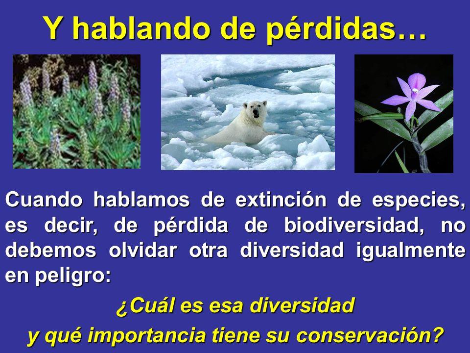 Y hablando de pérdidas… Cuando hablamos de extinción de especies, es decir, de pérdida de biodiversidad, no debemos olvidar otra diversidad igualmente