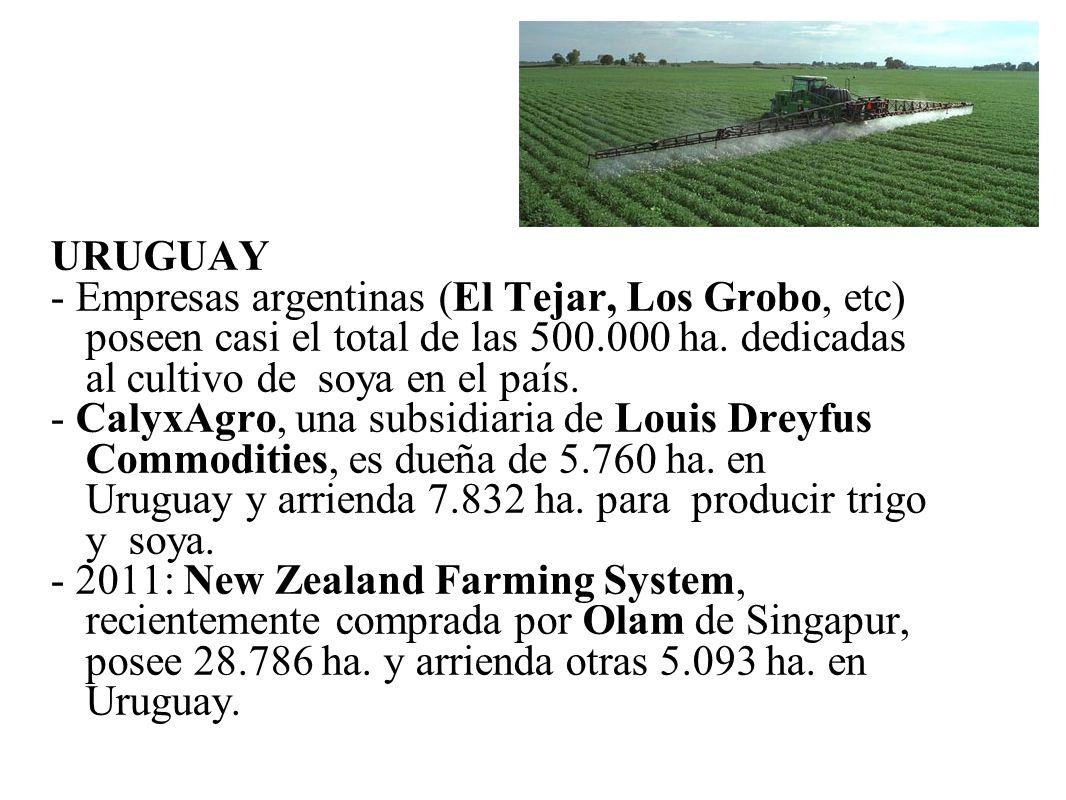 URUGUAY - Empresas argentinas (El Tejar, Los Grobo, etc) poseen casi el total de las 500.000 ha. dedicadas al cultivo de soya en el país. - CalyxAgro,