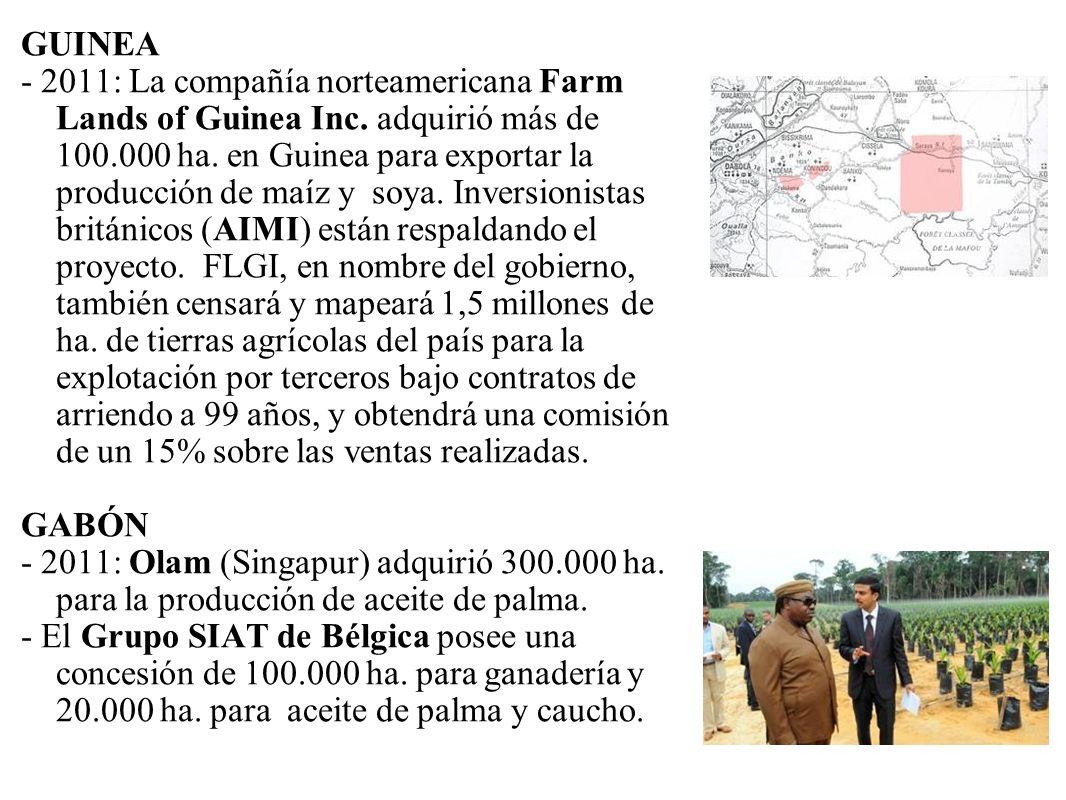 GUINEA - 2011: La compañía norteamericana Farm Lands of Guinea Inc. adquirió más de 100.000 ha. en Guinea para exportar la producción de maíz y soya.