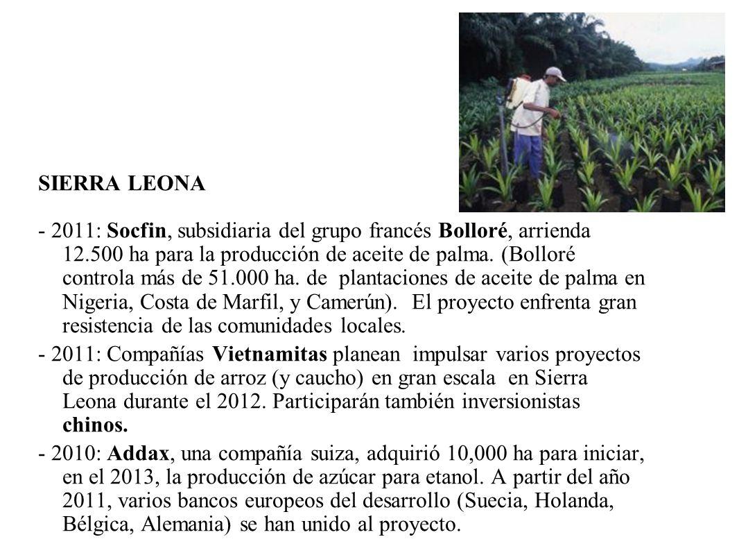 SIERRA LEONA - 2011: Socfin, subsidiaria del grupo francés Bolloré, arrienda 12.500 ha para la producción de aceite de palma. (Bolloré controla más de