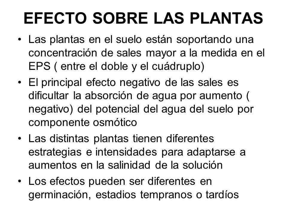 EFECTO SOBRE LAS PLANTAS Las plantas en el suelo están soportando una concentración de sales mayor a la medida en el EPS ( entre el doble y el cuádrup