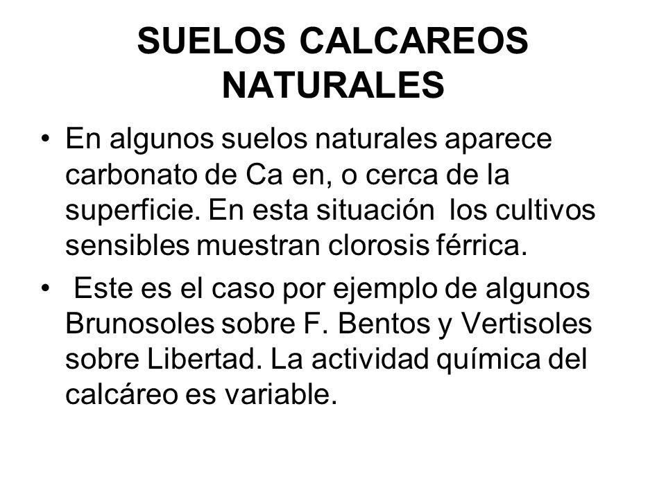 SUELOS CALCAREOS NATURALES En algunos suelos naturales aparece carbonato de Ca en, o cerca de la superficie. En esta situación los cultivos sensibles