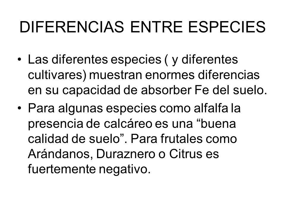DIFERENCIAS ENTRE ESPECIES Las diferentes especies ( y diferentes cultivares) muestran enormes diferencias en su capacidad de absorber Fe del suelo. P