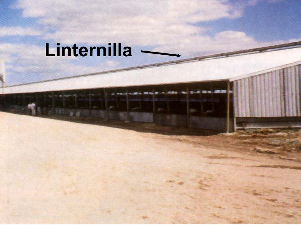 Linternilla